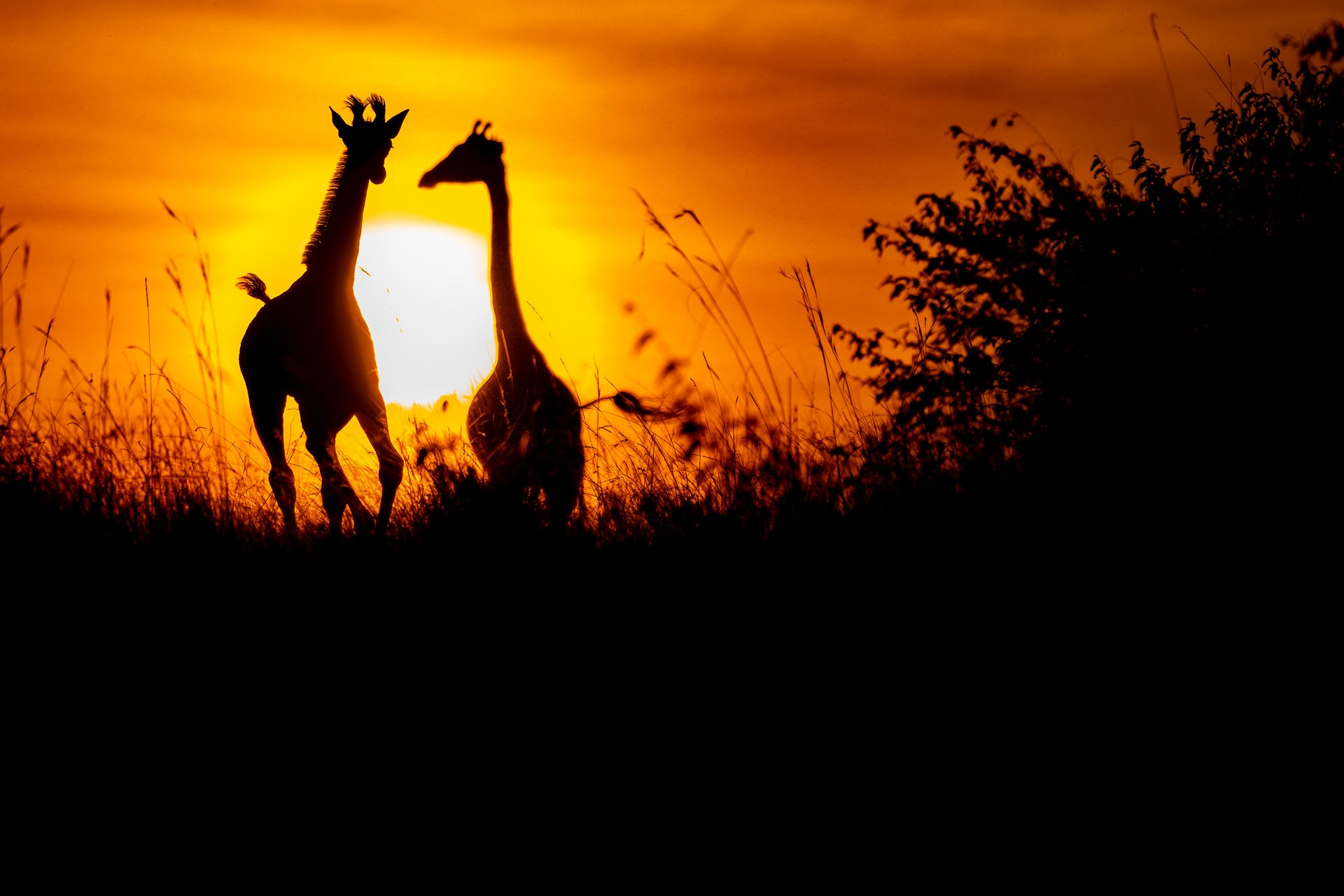 Kenyan Dreams