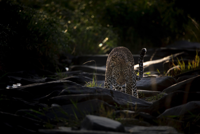 Stalk in first light