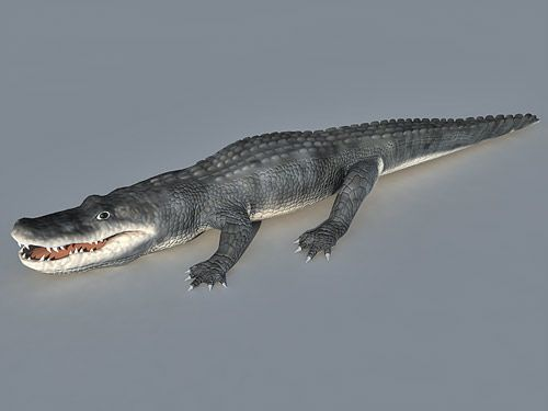 Alligator free 3d model