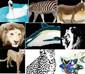 Vectors – Animal Pack 1