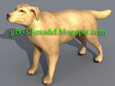Dog animal model