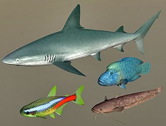 Fish Collection 06