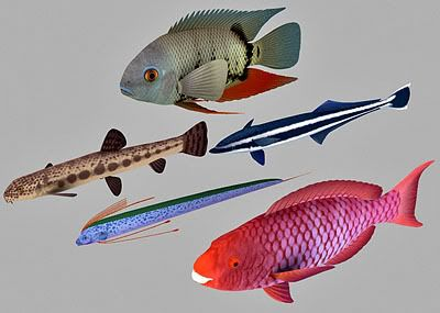 Fish 3d model collection – 08