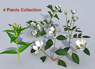 Plants_collection 04