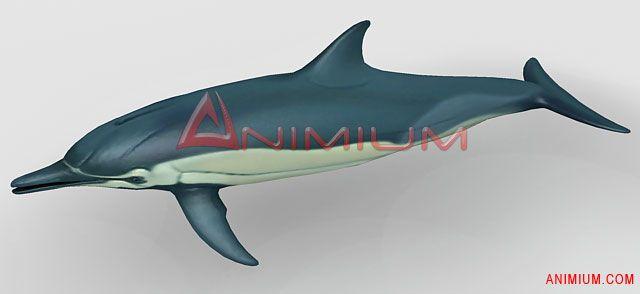 Dolphin 3d model