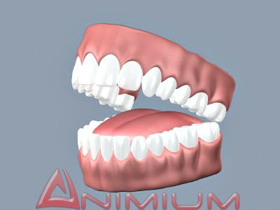 3d models Teeth and Tongue