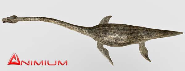 Elasmosaurus 3d model