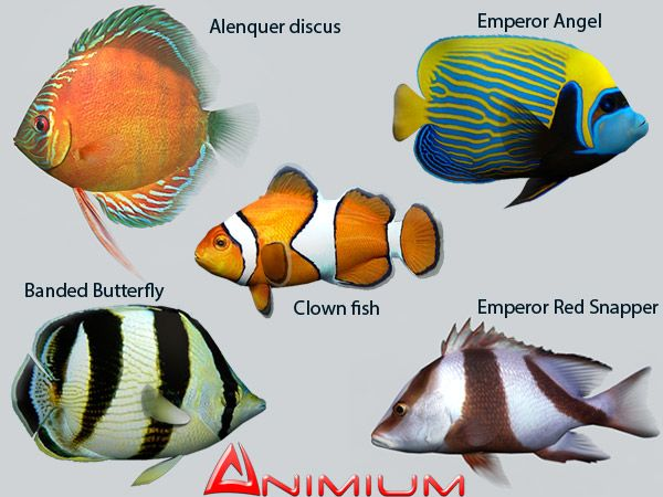 Tropical fish collection 1