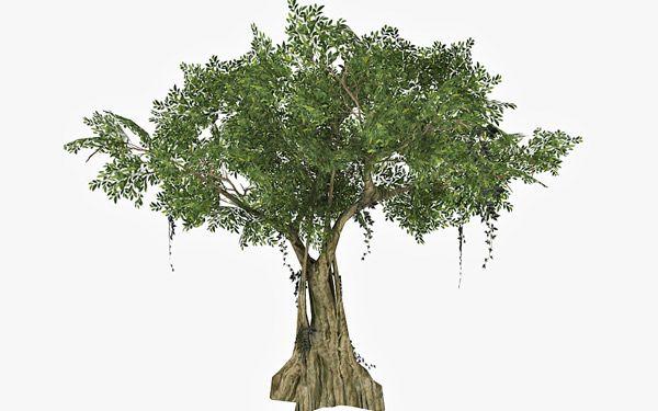 Banyan Tree 3d model – Animium 3D Models