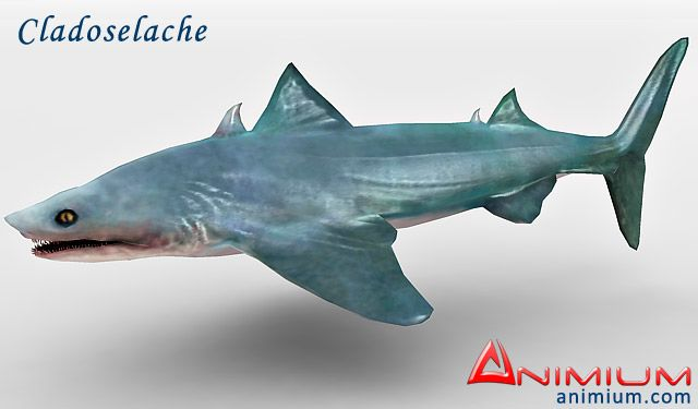 Cladoselache 3d model