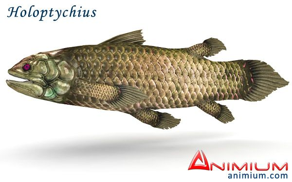 Holoptychius 3d model