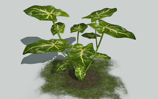 Arrowhead plant 3d model – Animium 3D Models