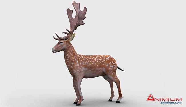 Lowpoly Deer 3d model