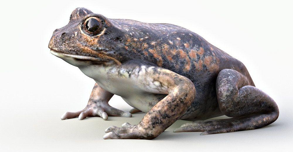 Banjo Frog 3d model
