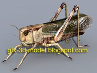 3D Insects – Animium 3D Models