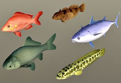 Fish_collection 03