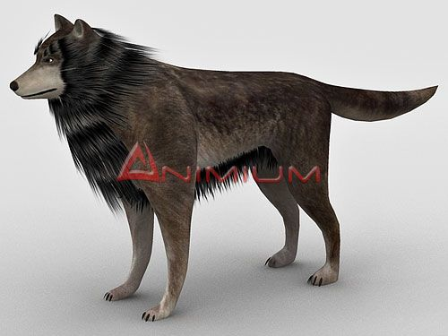 Wolf 3d animal model