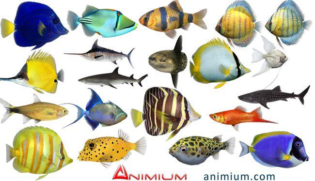 Tropical fish 3d models