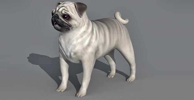 Pug Dog 3d model