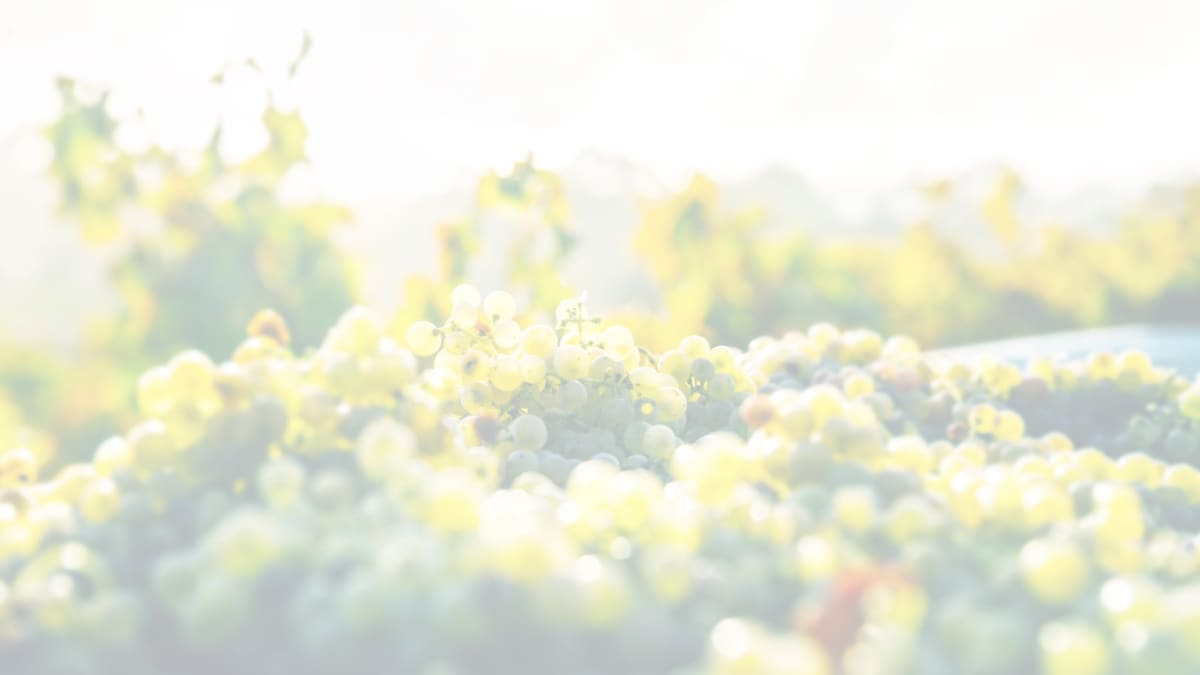 Anora brand - close up of grapes - light