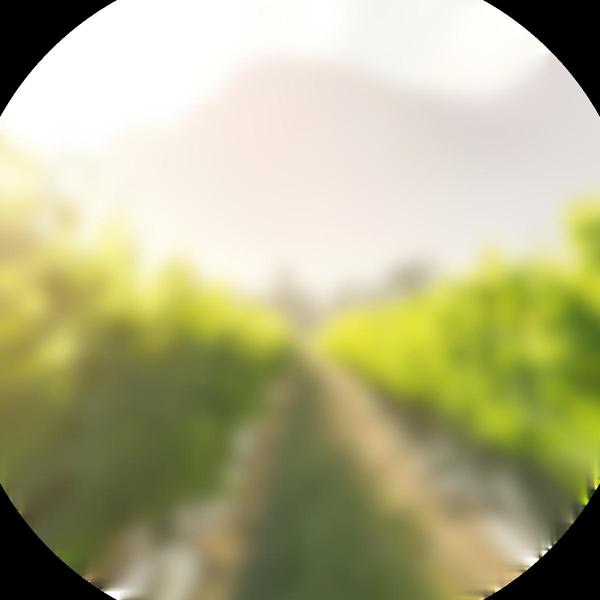 Anora brand - vineyard - round image