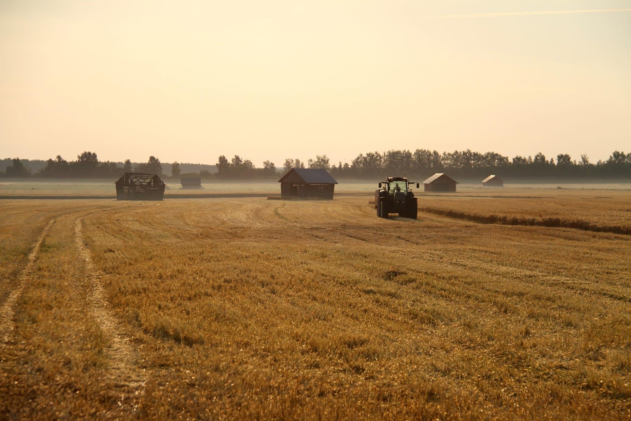 Harvest in Koskenkorva fields