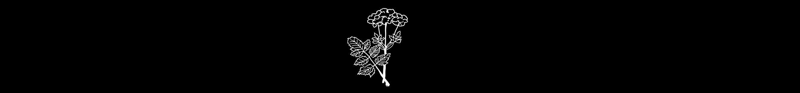 Valhalla herb - Angelica archangelica
