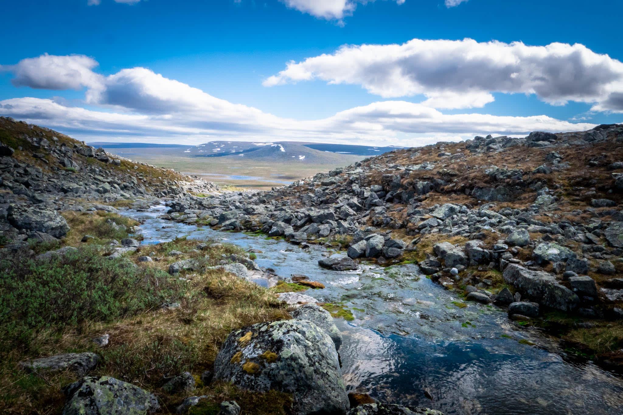 Nordic Nature Stream and Rocks