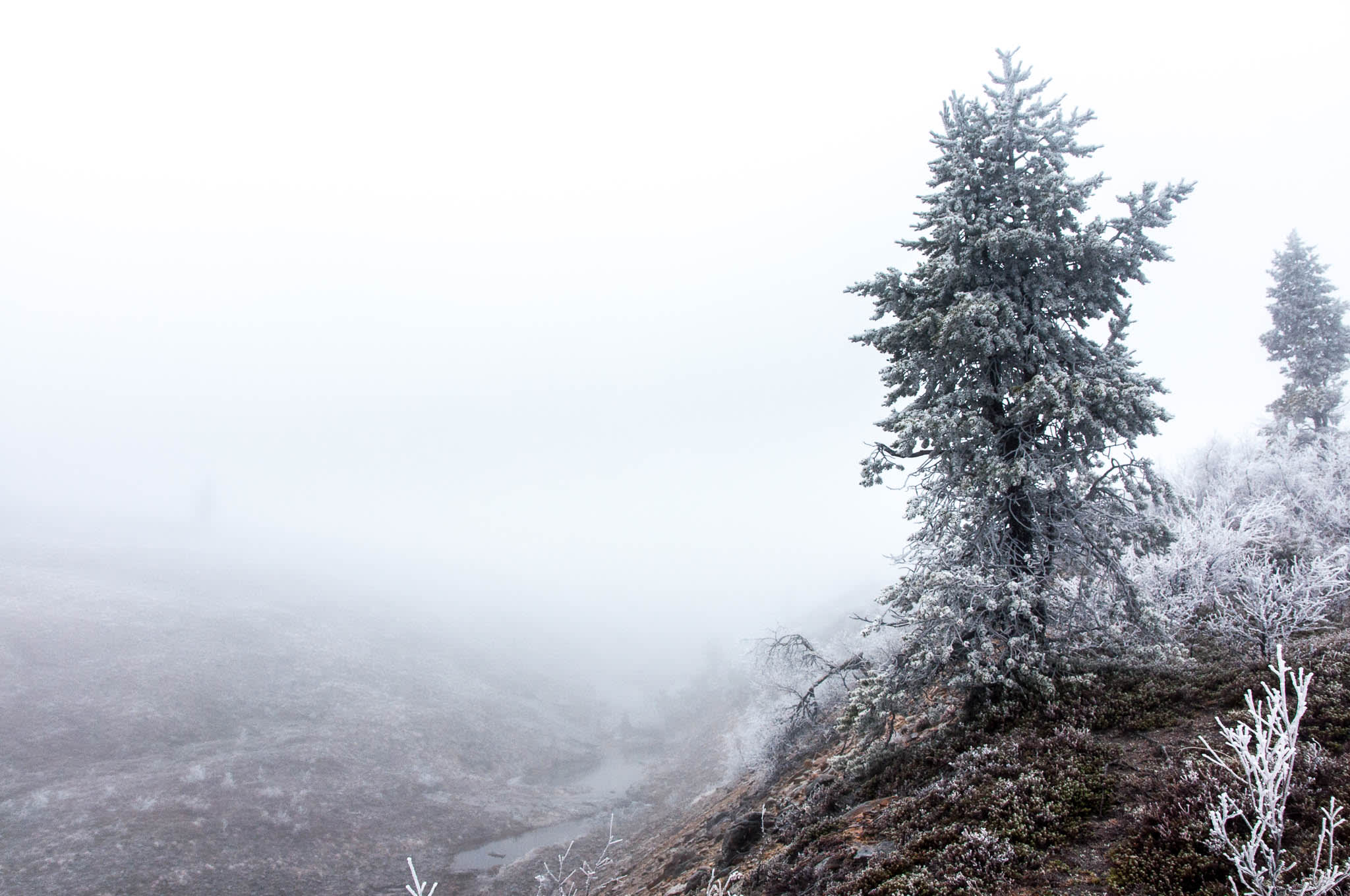 Nordic nature foggy view from mountain top