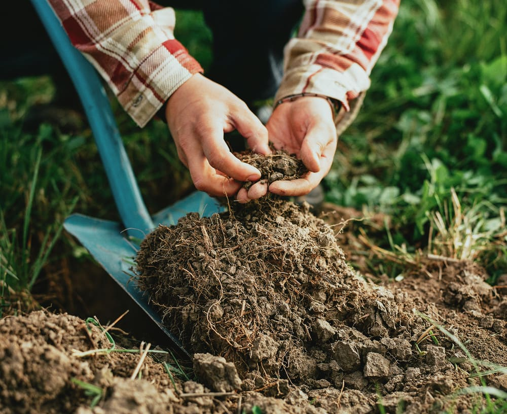 Koskenkorva Climate Action Planting