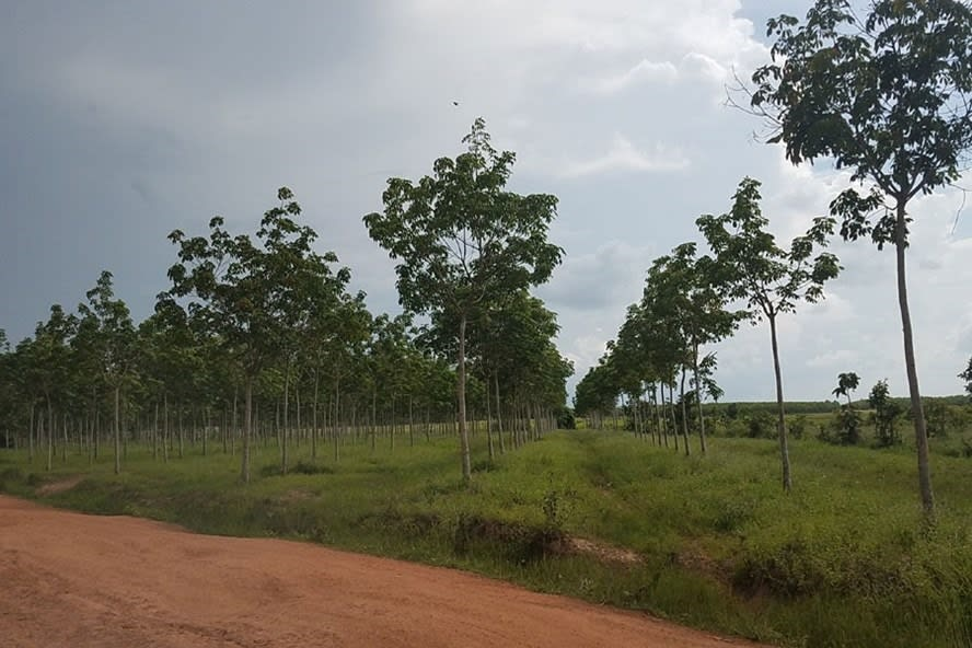 Điều kiện chuyển đổi đất rừng sang đất ở năm 2021