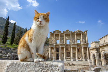 Ephesus Tour from Istanbul Picture