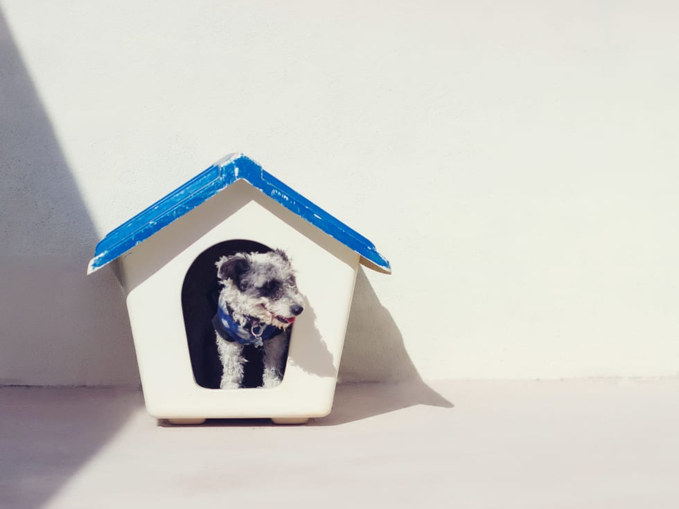 Renters Pet Insurance And All You Need To Know About It Renter Life