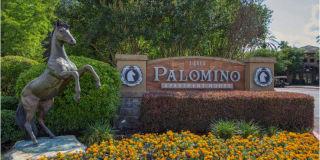 Palomino Photo Gallery 1
