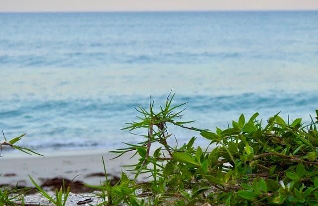 737 Eugenia Road - 737 Eugenia Road, Vero Beach, FL 32963