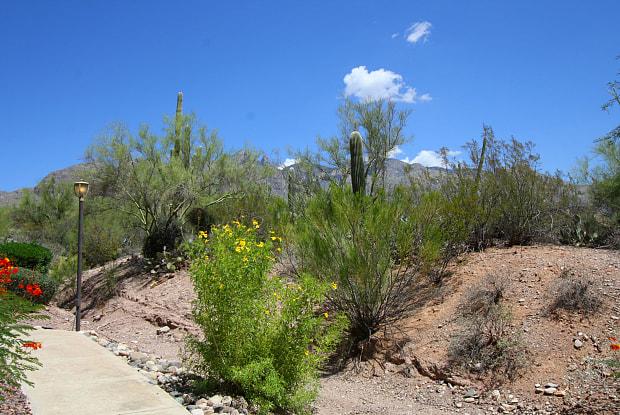 3230 E Calle De La Punta - 3230 East Calle De La Punta, Catalina Foothills, AZ 85718