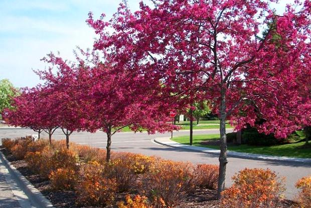 Woodbury Park at City Centre - 2150 Vining Drive, Woodbury, MN 55125