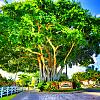 117 E Lee Road - 117 East Lee Road, Delray Beach, FL 33445