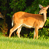 1512 Forest Knolls Circle - 1512 Forest Knolls Cir, Winston-Salem, NC 27101