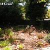 1749 Ruth - 1749 Ruth Drive, Pleasant Hill, CA 94523