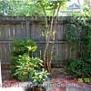 11 Maplecrest Drive - 11 Maplecrest Drive, Charleston, SC 29412