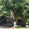 Park at Peachtree Hills - 480 Peachtree Hills Ave NE, Atlanta, GA 30305