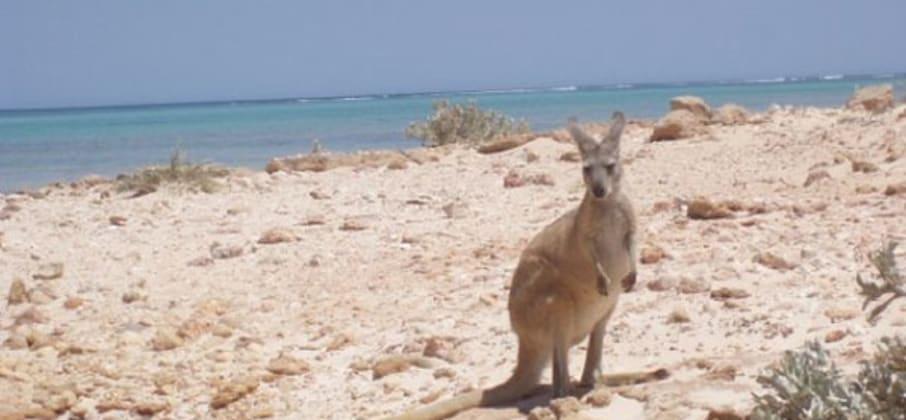 Le Top des activités en Australie