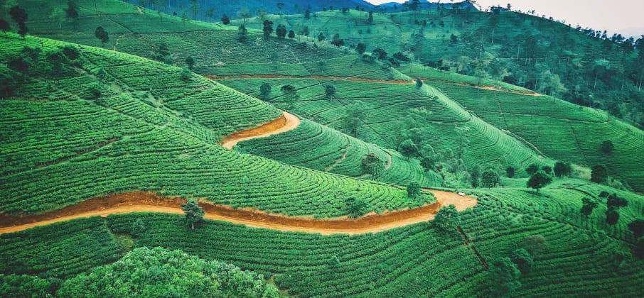Quelle langue parle-t-on au Sri Lanka ?