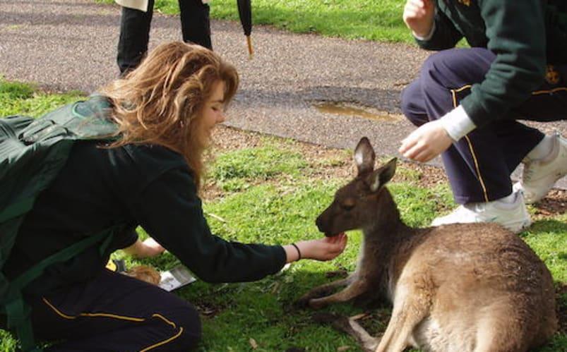 Scolarité en Australie
