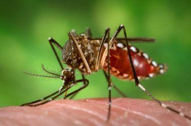 Szúnyogirtás  Önkormányzatoknak