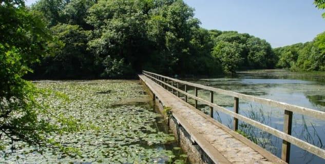 Cesta přes Bosherstonská jezera - http://www.geograph.org.uk/photo/3739960