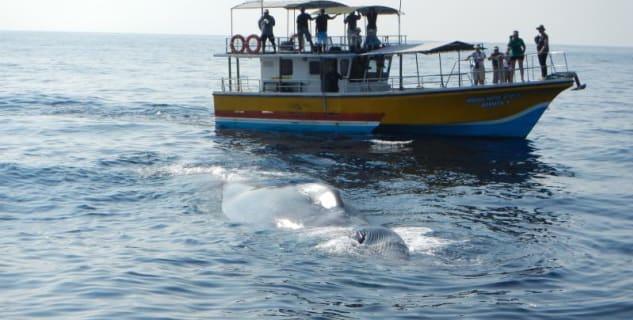 Pozorování velryb - https://www.flickr.com/photos/kwankwan/6928178734/