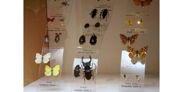 Svět hmyzu - http://www.gmv.hr/hr/o-muzeju/zbirke/ent-odjel/