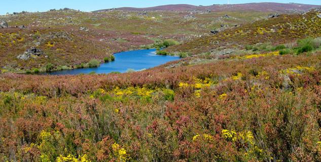 Parque Natural de Montesinho - http://commons.wikimedia.org/wiki/File:Parque_Natural_de_Montesinho_Porto_Furado_trail_(5733160672).jpg